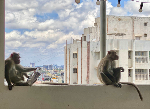Photo Of Two Monkeys Sitting On A Wall