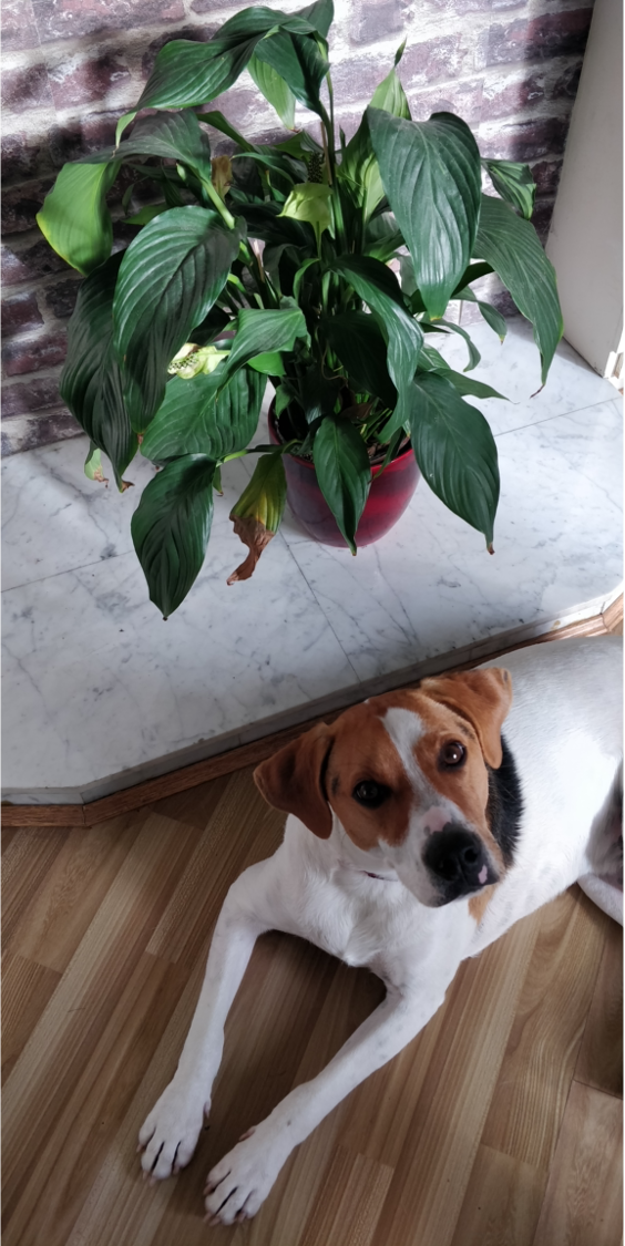 Photo Of A Dog And A Plant