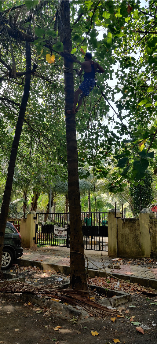 Photo of a tree in India